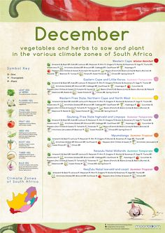 Growing your own organic delicious food is most rewarding! These educational Moonbloom posters will help guide you. South Africa Honeymoon, Vegetable Garden, Delicious Food, Asparagus, Herbs, Posters, Organic, Vegetables, Plants