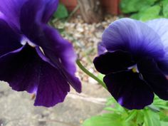 Purple velvet