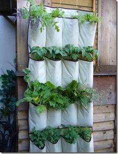 A sapateira que virou horta. #recicle #reutilize