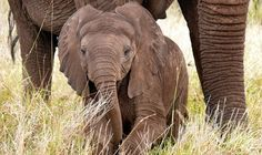 Will Humanity Step up for Elephants