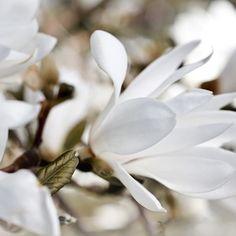 Hortensje bukietowe – przegląd nowych odmian - Allegro.pl Plants, Plant, Planets