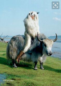 Sengdroma : Tibetan Goddess called upon as a protector of herds. ------   tim walker for british vogue