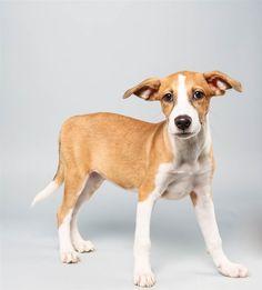 Dee Dee the Terrier Mix terriers, puppies, terrier mix, 2014 puppi, dog, puppi bowl, bowl 2014, bowls, dee dee
