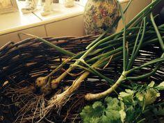 garden to kitchen by basket