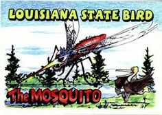 Mosquito...ain't far from the truth!