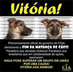 Parabéns aos ativistas chilenos.