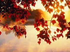 autumn-wallpaper-74.jpg (1600×1200)