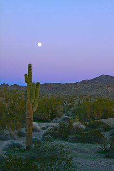 Moonrise Over Mojave Nature Aesthetic, Travel Aesthetic, Beautiful World, Beautiful Places, Photo Deco, Pretty Sky, Picture Wall, Pretty Pictures, Aesthetic Pictures