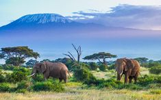 Tanzania Africa one of the top travel destinations in 2019 where to do in 2019 the obriens abroad family travel Monte Kilimanjaro, Top 10 Holiday Destinations, Top Travel Destinations, Banff, Africa Destinations, Tanzania Safari, Nepal, Stock Image, Parc National