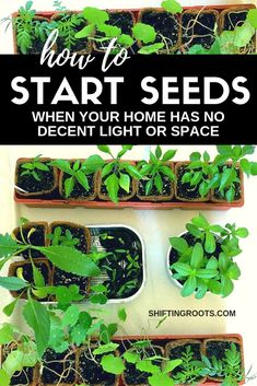 you believe there s a way to start seeds, even if you don t have a decent south facing window or live in a small space Here s how even a beginner gardener can start perennial flowers, annuals, or even vegetables over the winter and into the spring. Hydroponic Gardening, Container Gardening, Organic Gardening, Indoor Gardening, Kitchen Gardening, Indoor Plants, Gardening For Beginners, Gardening Tips, Flower Gardening