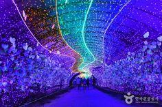 600만 구의 LED전구로 화려하게 수놓아진 25가지 테마 포토존에서 추억을 남길 수 있는 <태안빛축제>