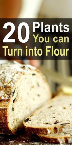 20 Plants you can turn into Flour. Wheat is a staple of almost everyone's diet, but it can be difficult to grow. Thankfully, there's a plethora of other plants that can be made into flour. Emergency Food, Survival Food, Survival Skills, Survival Tips, Homestead Survival, Survival Supplies, Emergency Preparedness, Emergency Preparation, Emergency Kits