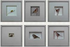 Johan Scherft's paper birds  La Coquette Miseráble