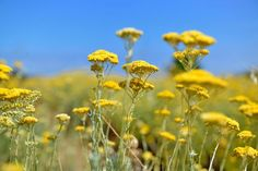 L'Immortelle, The Sunshine of the Corsican Maquis