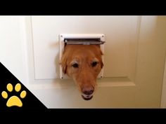 The magic cat door
