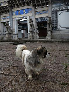Dog  RECORRIENDO LA CIUDAD GGUUAA