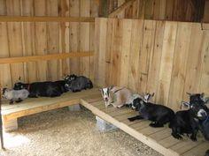 need barn plans and photos - Homesteading Today by elinor Keeping Goats, Raising Goats, The Farm, Mini Farm, Mini Goats, Baby Goats, Animal Original, Goat Playground, Goat Toys