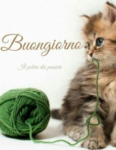 It will be very happy if you keep all-yarn, string or ribbon of any kind away from you fur babies ! It can KILL Happy Tuesday Morning, Good Afternoon Quotes, Good Morning Good Night, Good Morning Quotes, Happy Day, Afternoon Prayer, Days Of Week, Months In A Year, Tuesday Images