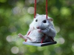 Tiny mouse on a tiny swing