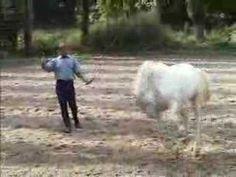 Horsefeelings