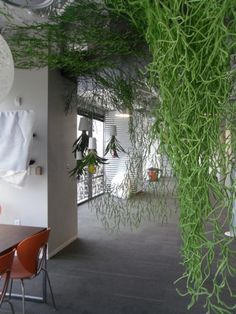 Interiorscapes by Plant Interscapes at Smiley Media.  #plantinterscapes #plants #decor #interiordecor #green #interiorscapes #decorateyouroffice #greenery #indoorplants
