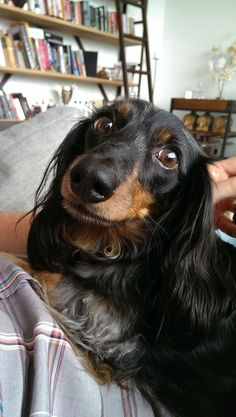 Dat face ~ re-pinned by doggiechecks.com ~ dog breed-themed personal checks and statinery.