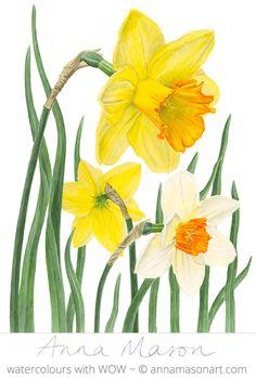 """Daffodils © 2010 ~ annamasonart.com ~ 31 x 41 cm (12"""" x 16"""") #AnnaMasonNewSite"""