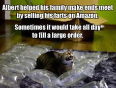 Albert helped his family make ends meet by selling his farts on Amazon... #catoftheday
