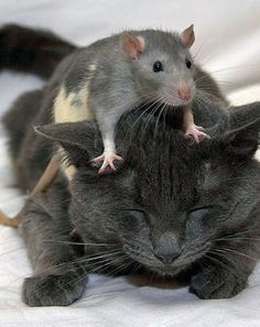 Community Post: 50 Pictures Of Cross-Species Friendships