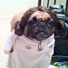 Great Halloween Costumes for dogs!