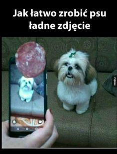 - 𖤐 memes 3 Funny Spanish Memes, Stupid Funny Memes, Wtf Funny, Funny Cute, Memes Humor, Memes Status, Animals And Pets, Cute Animals, Polish Memes