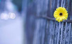Little flower scenery HD Wallpaper