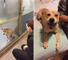 15 before-and-after photos of rescued animals that will put a smile on your face