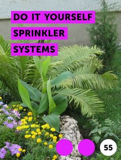 How to Drain a Lawn Sprinkler System How to Drain a Lawn Sprinkler System. A lawn sprinkler system c Ficus Pumila, Types Of Pine Trees, Rosemary Flower, Rosemary Plant, Growing Green Beans, Growing Grass, Lawn Sprinkler System, Mexican Feather Grass, Growing Dahlias