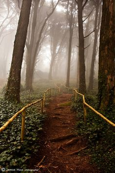 Mystical Journey, Sintra, Portugal.  Love the Bamboo railing!