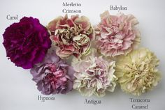 Carnations - Wholesale Flowers for weddings and events – Wholesale Florist – Floral, Floral Supply, Flower Distributor Colorful Flowers, Beautiful Flowers, Flower Colors, Carnation Colors, Floral Design Classes, Flower Chart, Romantic Wedding Flowers, Chic Wedding, Flower Identification