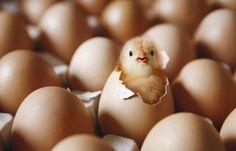Mynet Trend - Yumurta Kabuğu Muzicesi