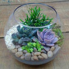 """Perfeito para decorar! #succulent #succulents #suculentas #terrarium #terrario #terrarios #minijardim #minigarden #jardim #garden #decoracao #decor…"""