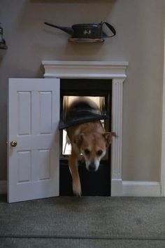 Sweet doggie door, must have this for Hermes