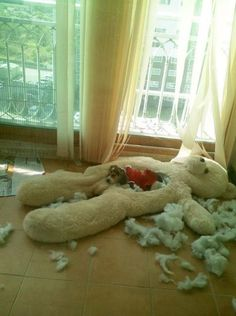 DIY dog bed....made by the dog.