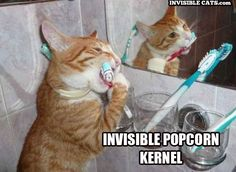 lol, hate it when that happens! haha this cat is SO cute