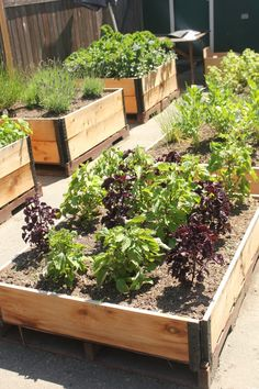 The Acorn Collaboration   Victory Gardens