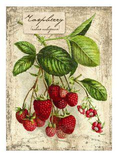 strawberry printable