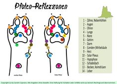 Pfoten-Reflexzonen by Carolin Caprano The post Paw reflexology appeared first on Huge. Pet Care Tips, Dog Care, Pet Dogs, Dogs And Puppies, Education Canine, Cat Supplies, Reflexology, Dog Memes, Pet Health