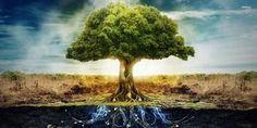 Árvore da Vida - os significados celta e bíblico