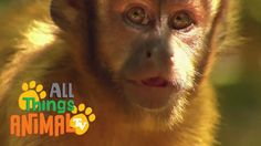 MONKEY: Animals for children. Kids videos. Kindergarten | Preschool lear...