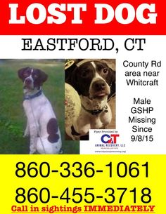 REUNITED    Male GSHP missing from EASTFORD. He was wearing an orange collar when he went missing. From Country Rd near Whitcraft. Please Do Not Chase Him. Please call immediately if you see him. Please share