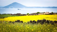 Error page : tour du lich han quoc 6 ngay thang 56 seoul nami everland jeju hk jin air pt Isla Jeju, Seoul, Spring Pictures, Jeju Island, Back Road, Travel Magazines, Honeymoon Destinations, Amazing Nature, Beautiful Landscapes