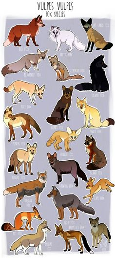 Fox species and colors illustrations, but the forgot the marble fox. Cute Animal Drawings, Animal Sketches, Art Drawings, Cute Fox Drawing, Fox Species, Fox Art, Animal Facts, Wild Dogs, Art Reference Poses