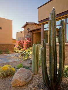 Large cactus entry way